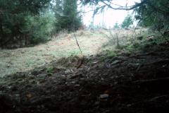 Wildkatzenplatz-am-Tag