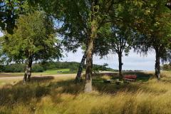 Aussicht-an-den-Birken-Heinzenberger-Feld